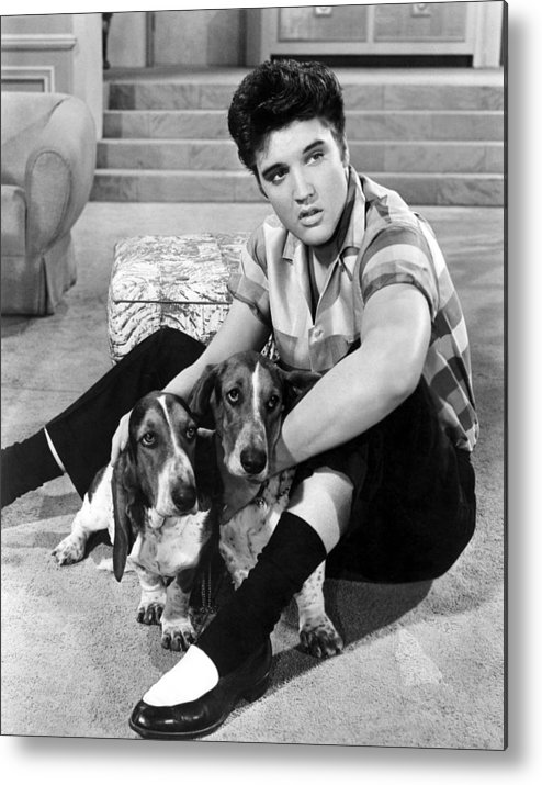 1950s Portraits Metal Print featuring the photograph Jailhouse Rock, Elvis Presley, 1957 by Everett