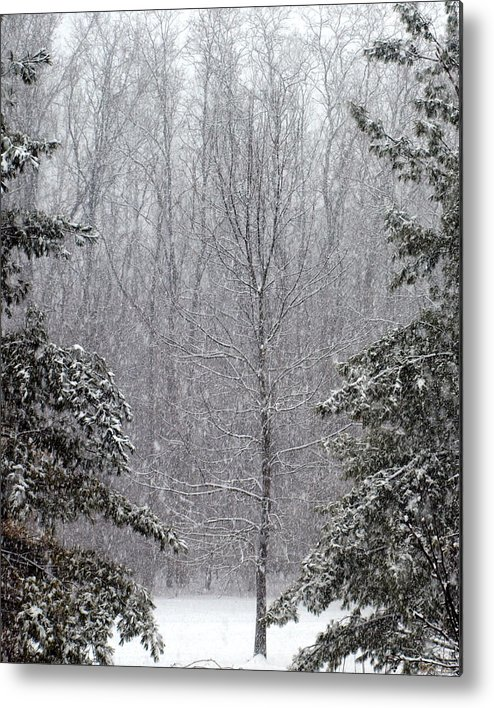 Snow Metal Print featuring the photograph A Snowy Day In The Woods by Mike Stanfield