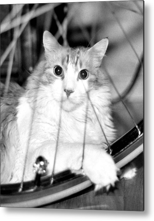 Cats Metal Print featuring the photograph Bicycle by Heather S Huston