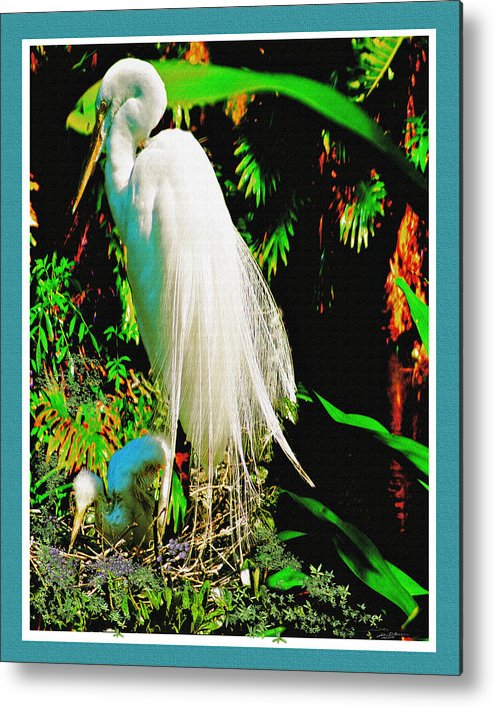 Florida Birds Egret Snow White Egret Metal Print featuring the digital art Egret3 by John Breen