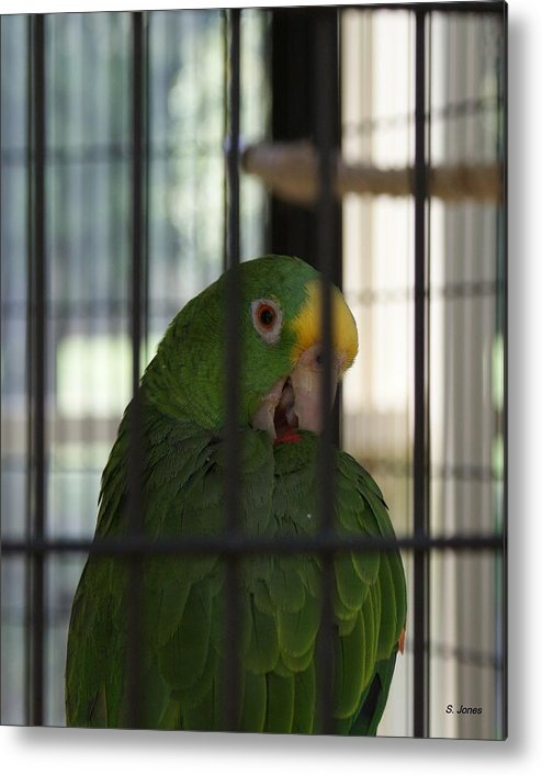 Parrot Metal Print featuring the photograph Framed by Shelley Jones