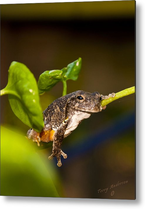 Frog Metal Print featuring the photograph Frogs Life by Terry Anderson