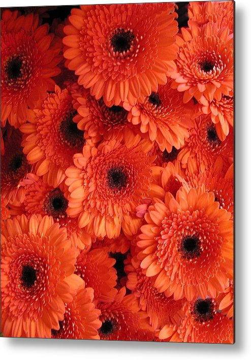 Flowers Metal Print featuring the photograph Orange Daisies by Tom Reynen