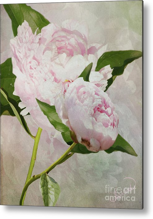 Digital Metal Print featuring the digital art Pastel Peonies by Judy Brand