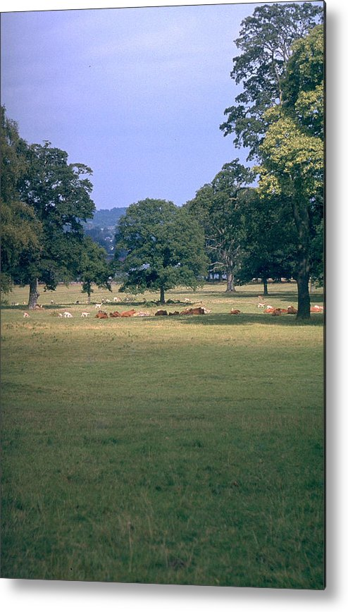 Great Britain Metal Print featuring the photograph Pasture by Flavia Westerwelle