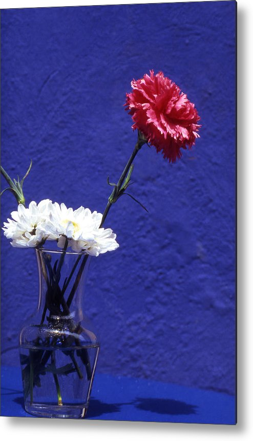 Blue; Bloom; Beauty In Nature; Botany; Carnation; Close-up; Close; Up; Crete; Color; Metal Print featuring the photograph Red Carnation by Steve Outram