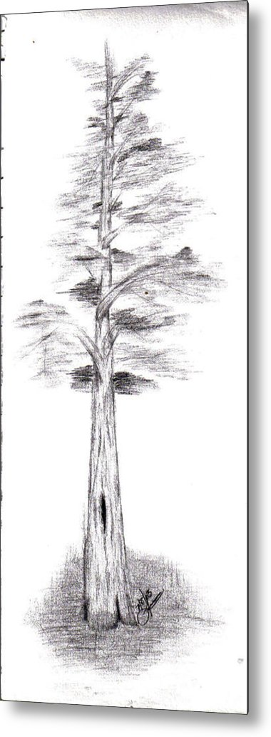 Metal Print featuring the drawing Pine Tree by Lynnette Jones