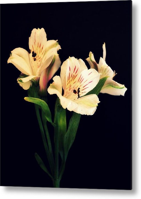 Alstros Metal Print featuring the photograph Alstroemeria Sprig by Cathie Tyler