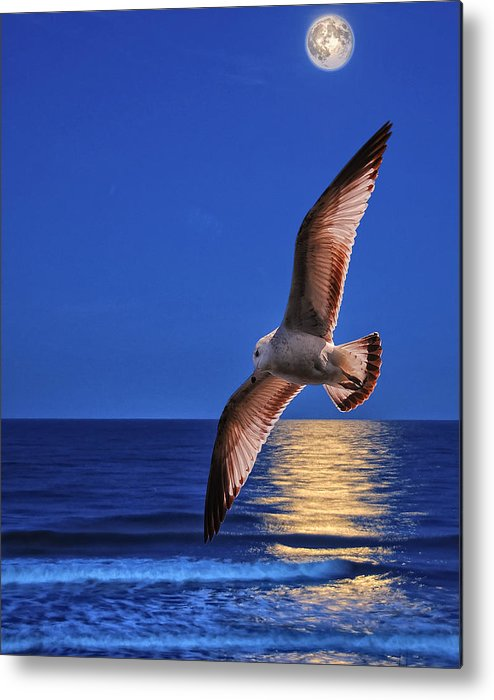 Seagull Metal Print featuring the photograph Bird In Moonlight by Peg Runyan