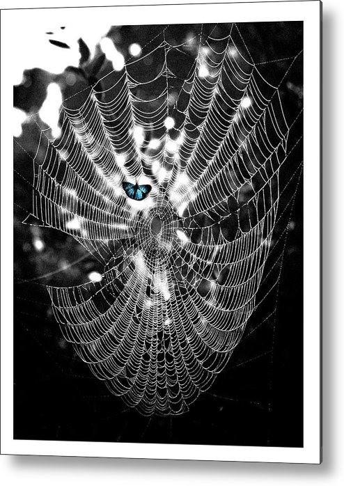 Spider Web Metal Print featuring the photograph Blue Morpheus by Priscilla Rink