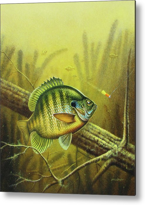 Jon Q Wright Metal Print featuring the painting Bluegill And Jig by JQ Licensing