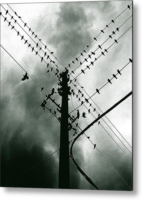 Birds Metal Print featuring the photograph Here It Comes by Justin Dyal