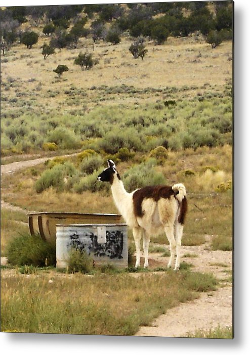 Llama Metal Print featuring the photograph Llama Land by Mary Rogers