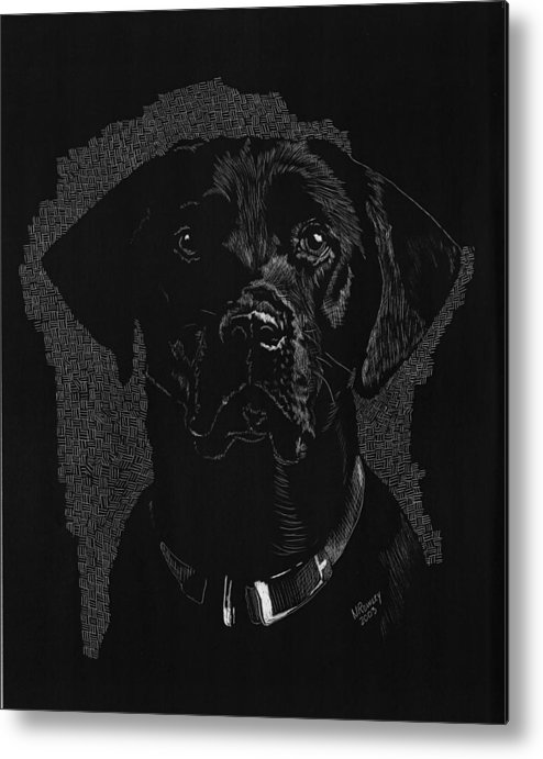 Scratchboard Metal Print featuring the drawing Sadie by Norma Rowley