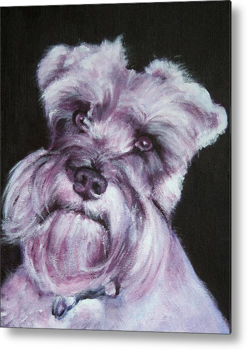 Schnauzer Metal Print featuring the painting Spike by Fiona Jack