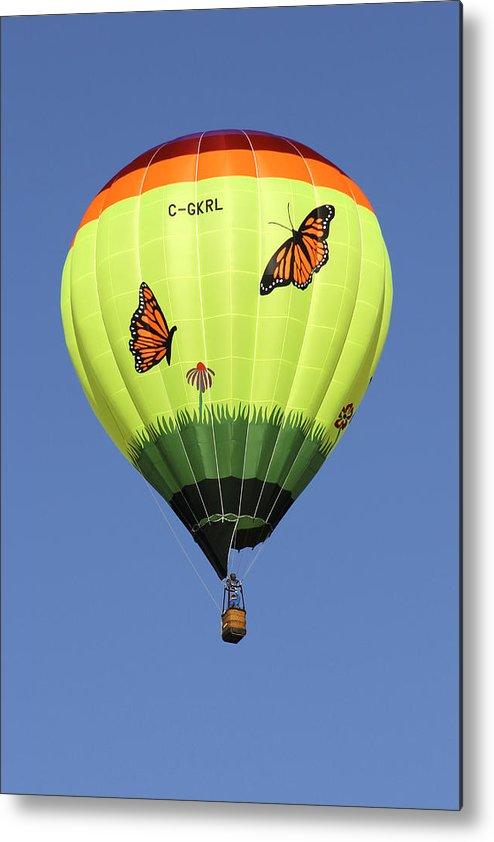 Monarch Butterflies Metal Print featuring the photograph Butterflies by Mike McGlothlen