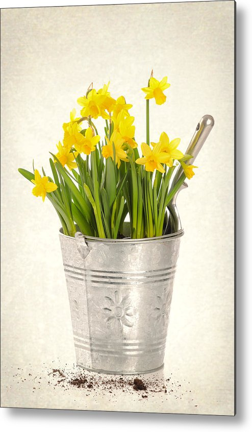 Spring Metal Print featuring the photograph Daffodils by Amanda Elwell