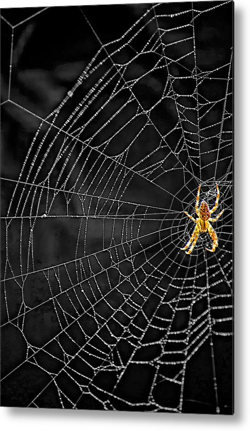 Bugs Metal Print featuring the photograph Itsy Bitsy Spider My Ass 3 by Steve Harrington