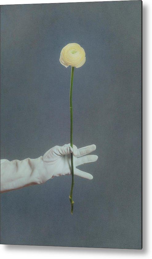 Flower Metal Print featuring the photograph Ranunculus by Joana Kruse