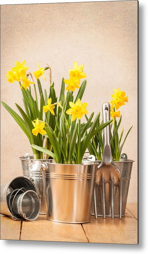 Spring Metal Print featuring the photograph Spring Planting by Amanda Elwell