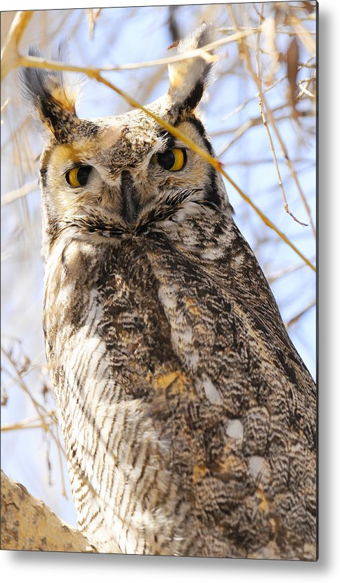 Bird Metal Print featuring the photograph Great Horned Owl by Dennis Hammer