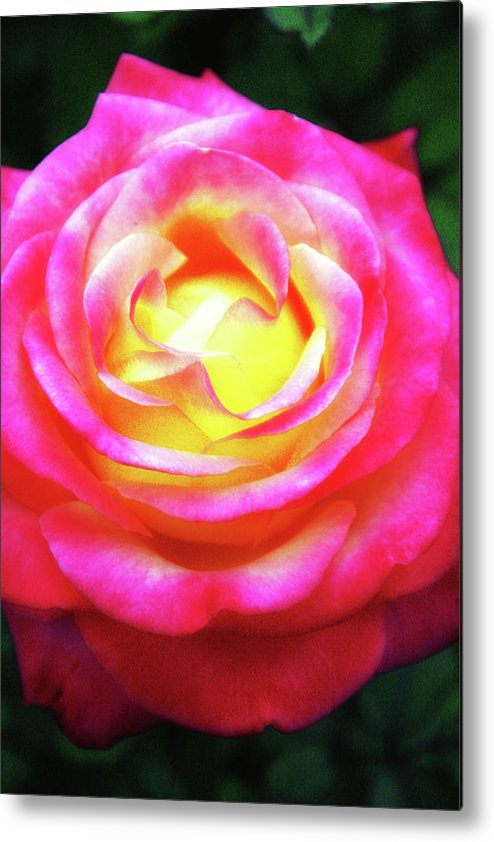 Flower Metal Print featuring the photograph A Rose By Any Other Name by Annee Olden