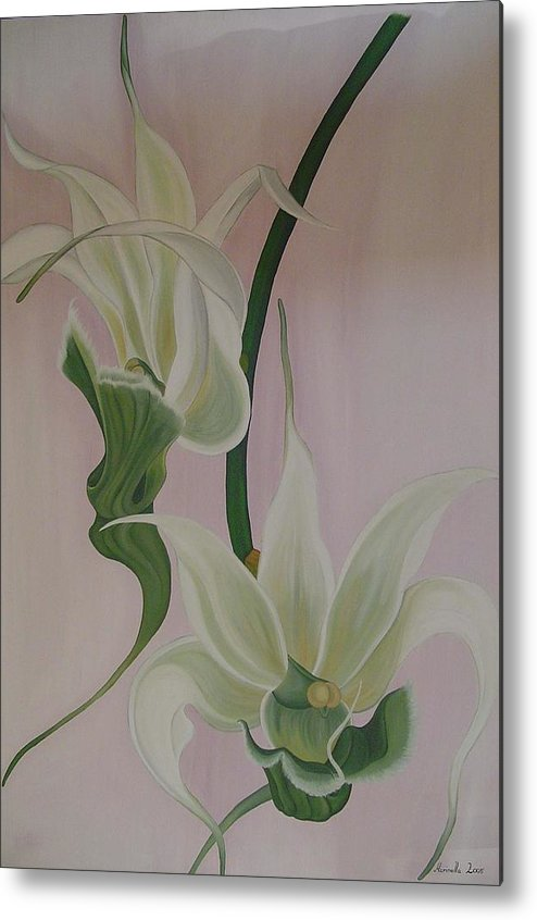 Marinella Owens Metal Print featuring the painting Aeranthes Peyrot Orchide by Marinella Owens