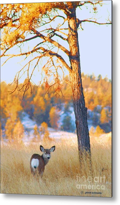 Art Metal Print featuring the photograph Autumn Light ... Montana Art Photo by GiselaSchneider MontanaArtist