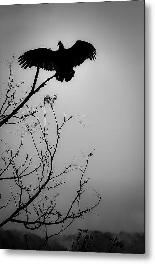 Black Metal Print featuring the photograph Black Buzzard 6 by Teresa Mucha