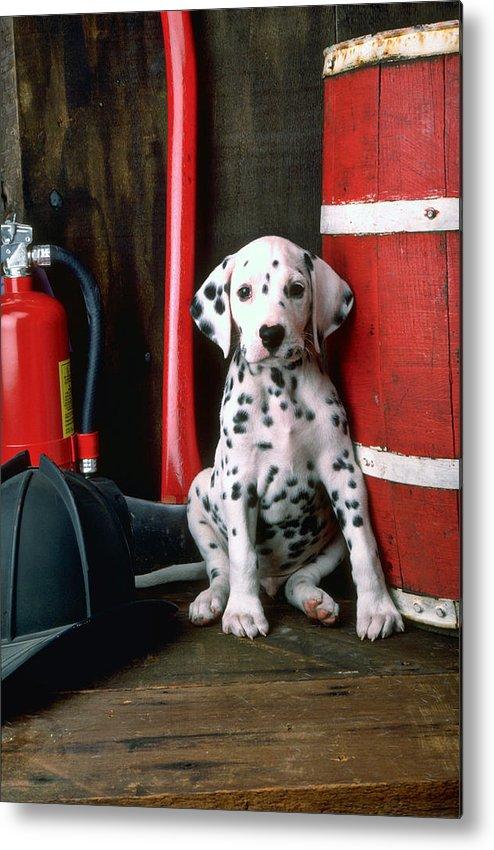 Dalmatian Puppy Fireman's Helmet Axe Barrel Metal Print featuring the photograph Dalmatian Puppy With Fireman's Helmet by Garry Gay