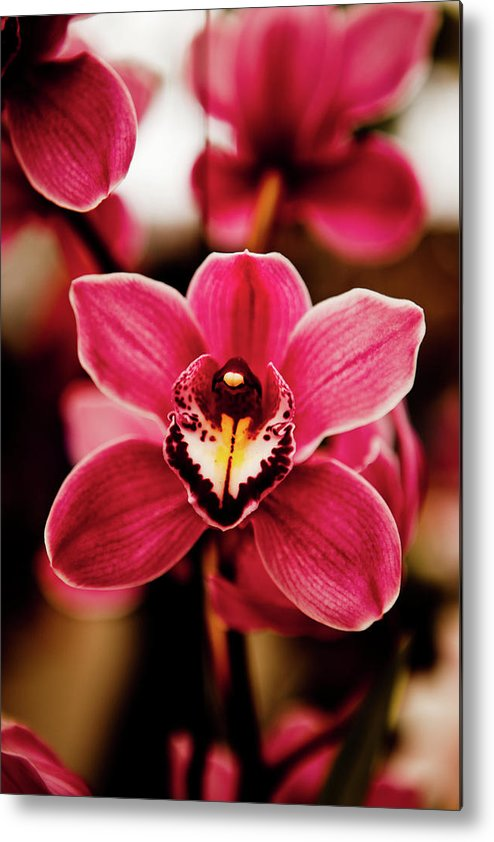 Vertical Metal Print featuring the photograph Deep Cut Orchid Society 15th Annual Orchid Show by Dan Pfeffer