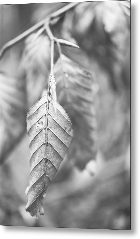 Leaf Metal Print featuring the photograph Dry by Gabriela Insuratelu