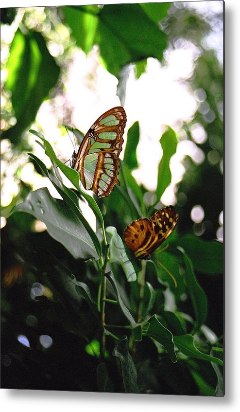Butterfly Metal Print featuring the photograph Emerald Beauty by Corynne Hilbert