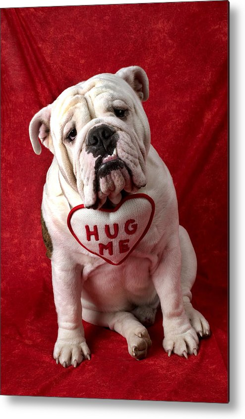 Dog Metal Print featuring the photograph English Bulldog by Garry Gay