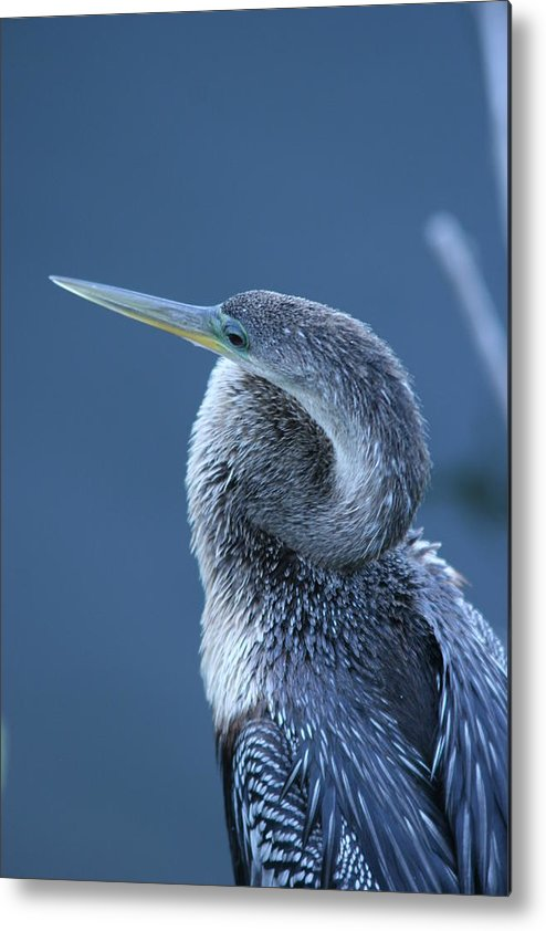 Everglades Metal Print featuring the photograph Everglades by Linda Russell