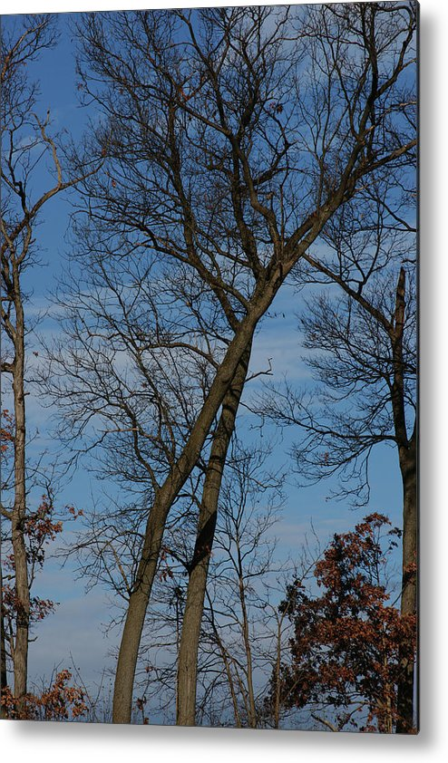 Woodland Metal Print featuring the photograph Framed In Oak - 2 by Linda Shafer