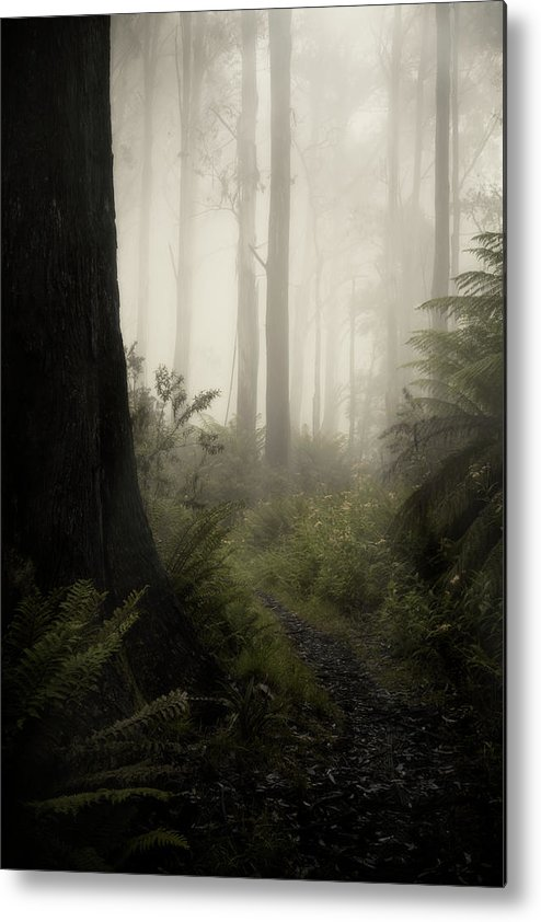 Fog Metal Print featuring the photograph From Darkness by Amy Weiss