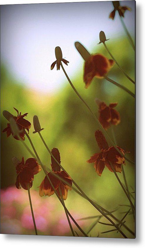 Flower Metal Print featuring the photograph Glory by Amy Neal