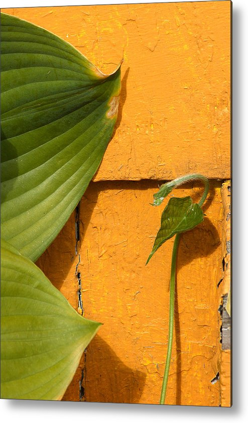 Color Metal Print featuring the photograph Green On Orange 4 by Art Ferrier