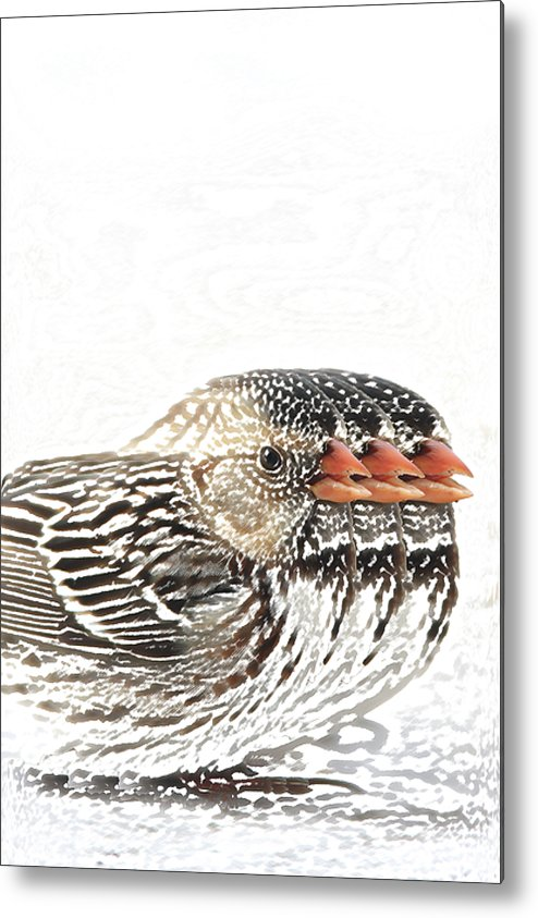 Sparrow Photograph Metal Print featuring the digital art Harris' Sparrow X 3 by Charrie Shockey