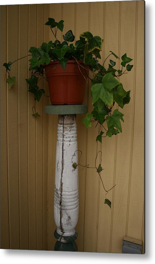 Planter Metal Print featuring the photograph Ivy Corner by Alan Rutherford