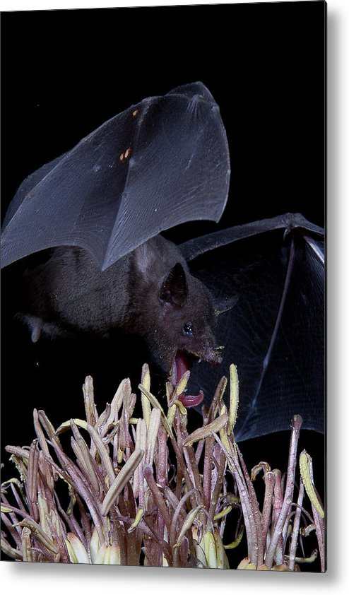 Nature Metal Print featuring the photograph Just A Little Bite by E Mac MacKay