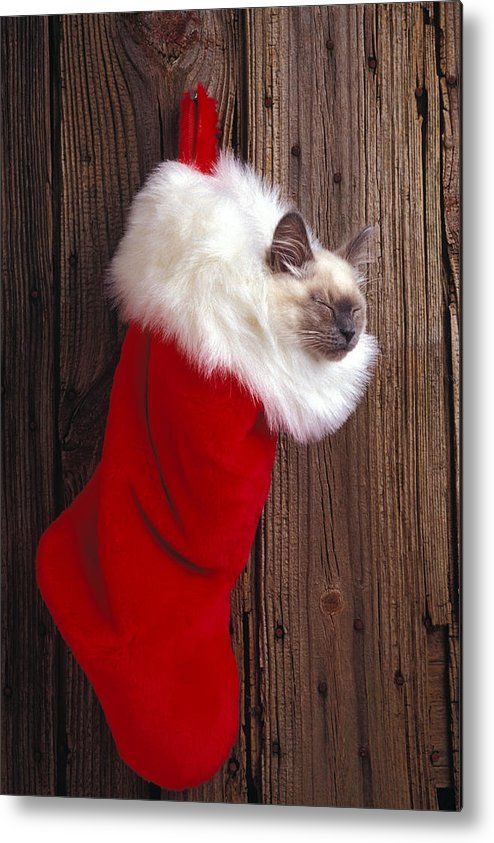 Kitten Metal Print featuring the photograph Kitten In Stocking by Garry Gay