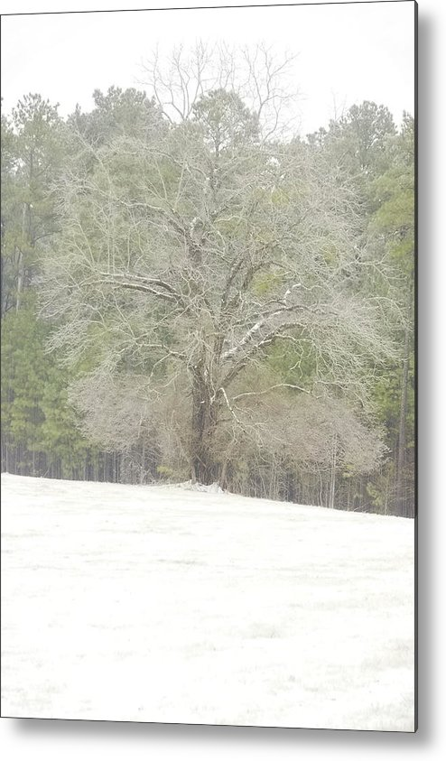 Oak Tree Metal Print featuring the photograph Lone Oak In The Georgia Snow by Peter Muzyka
