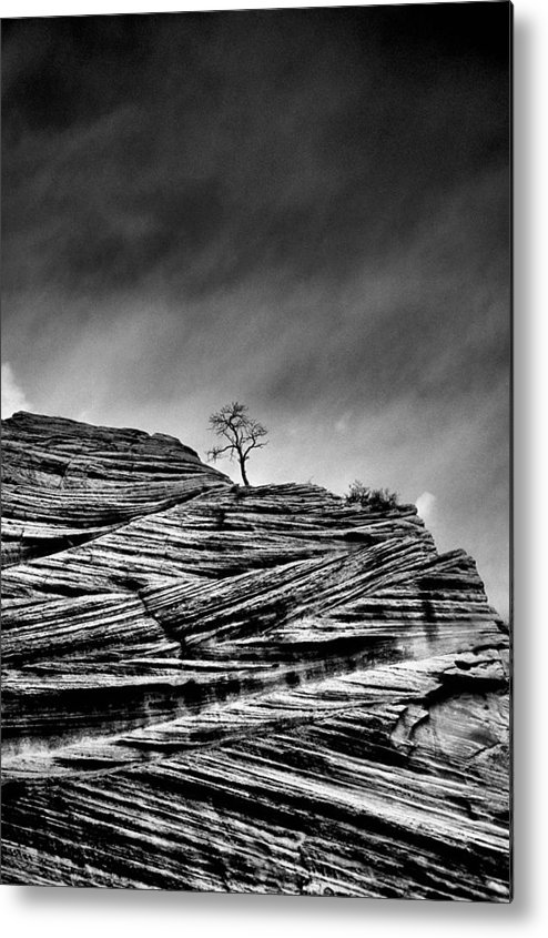 B&w Metal Print featuring the photograph Lone Tree Rid by Sarah-jane Laubscher