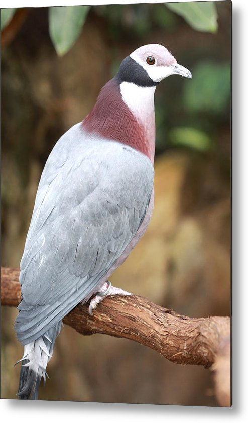 Bird Metal Print featuring the photograph Morning Song by Paul Slebodnick