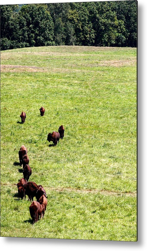 Buf Metal Print featuring the photograph Old Prairie Kings by Alan Look