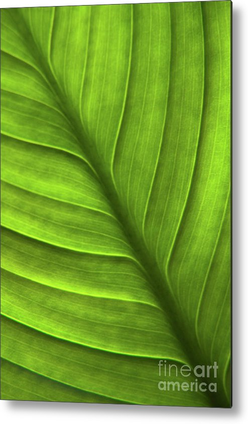 Nature Metal Print featuring the photograph Peace Lily Leaf by Julia Hiebaum