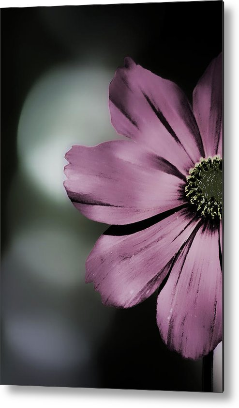 Cosmos Metal Print featuring the photograph Peekaboo by Bonnie Bruno