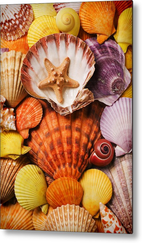 Seashells Metal Print featuring the photograph Pile Of Seashells by Garry Gay